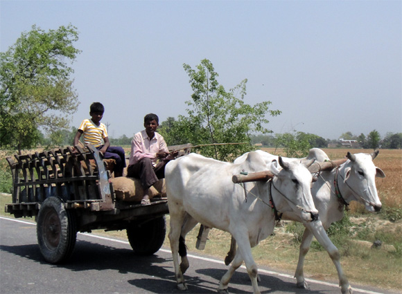 A villager on the road in Bihar's Champaran district