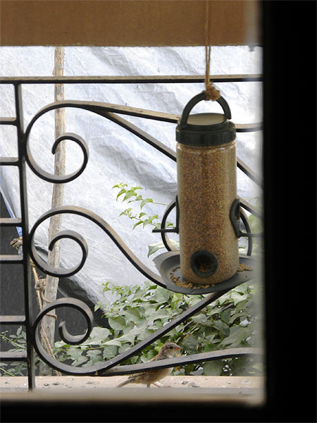Top: Sparrows in Gurgaon feed at a Nature Forever Society Rs 89 bird feeder. Right: Mohammed Dilawar