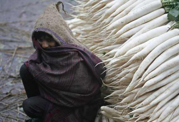 A boy covers himself with a shawl next to a heap of radishes on a cold winter day at a vegetable wholesale market in Chandigarh