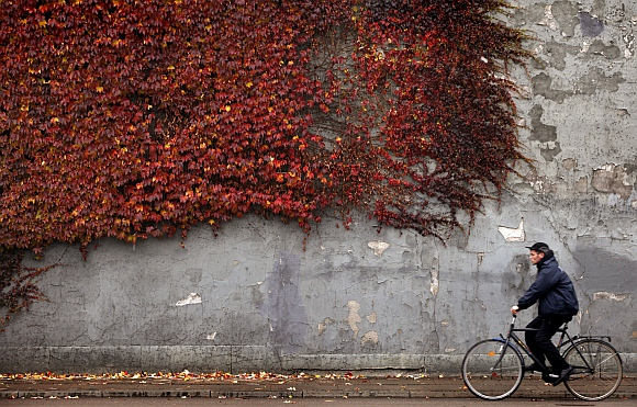 A cyclist rides past autumn-colored ivy climbing the wall of a building in downtown Copenhagen