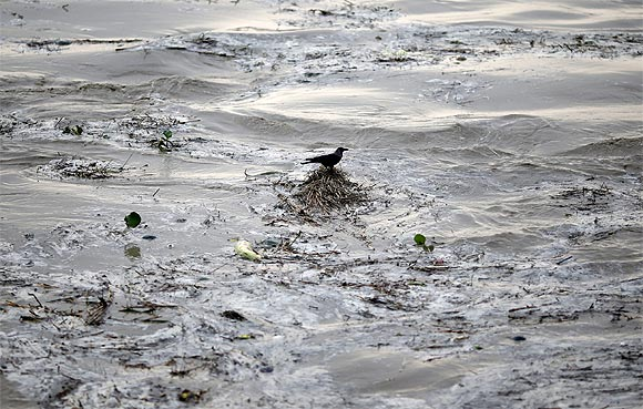 A crow sits over the floating bushes in the flooded waters of river Yamuna after heavy monsoon rains in New Delhi