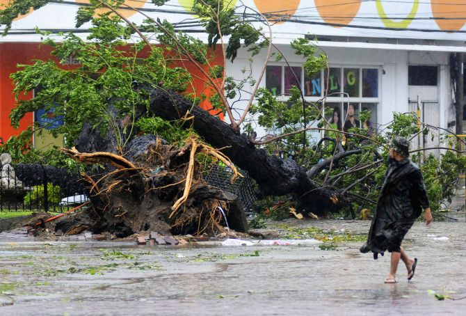 A man walks past a tree uprooted by strong winds brought by super Typhoon Haiyan in Cebu city.