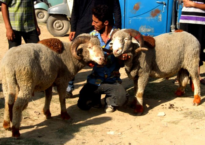 There was huge rush in shops selling sacrificial goats and sheep in the city