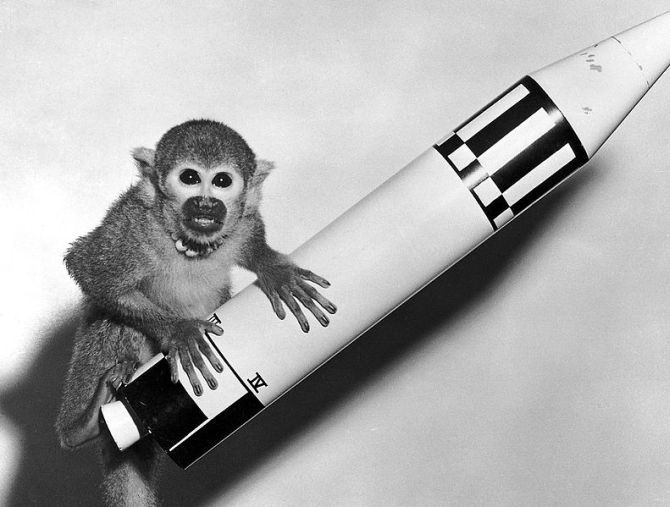 Squirrel monkey 'Baker' rode a Jupiter IRBM into space and back in 1959.