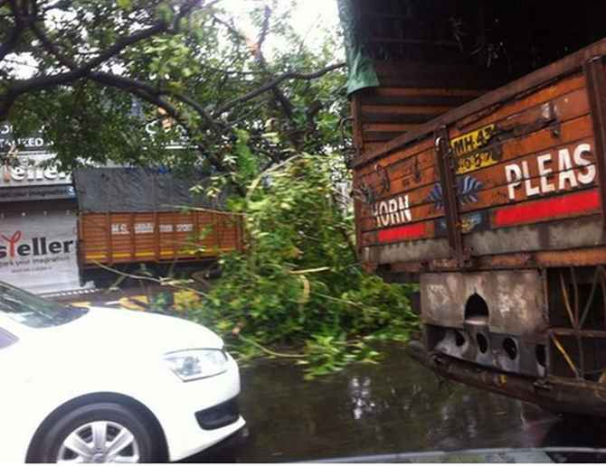 A fallen tree near the airport adds to traffic woes on the Western Express Highway on Wednesday