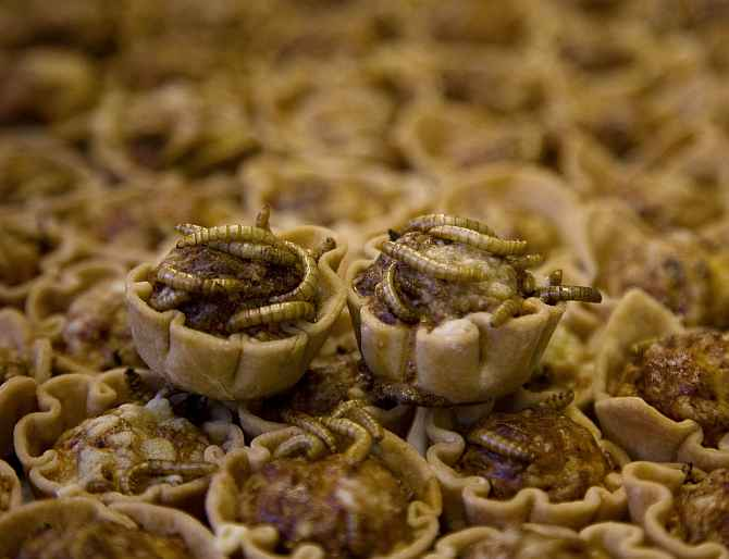 Yucky or Yummy? WEIRDEST foods from around the globe