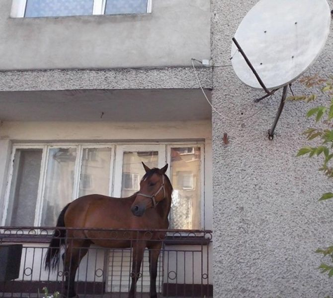 Man keeps horse on his balcony so thieves can't steal it