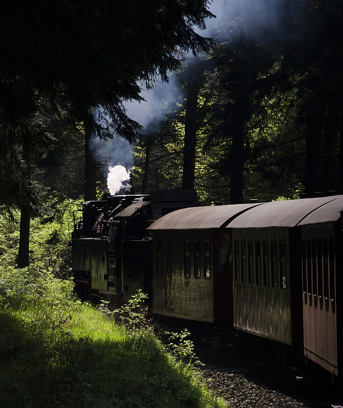 A HSB train travels through dense forest covering the Harz mountains near Wernigerode