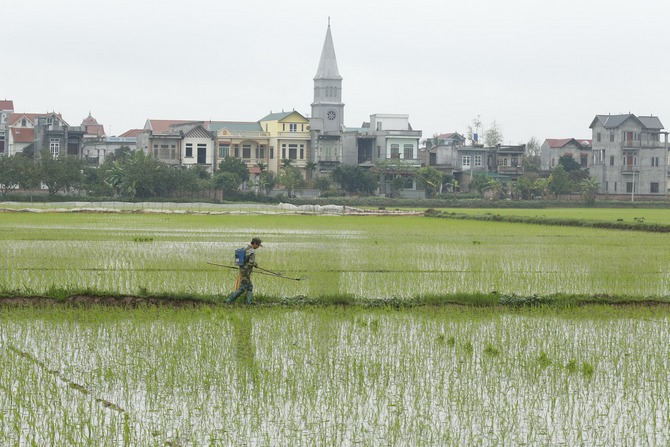 A rice field outside Hanoi