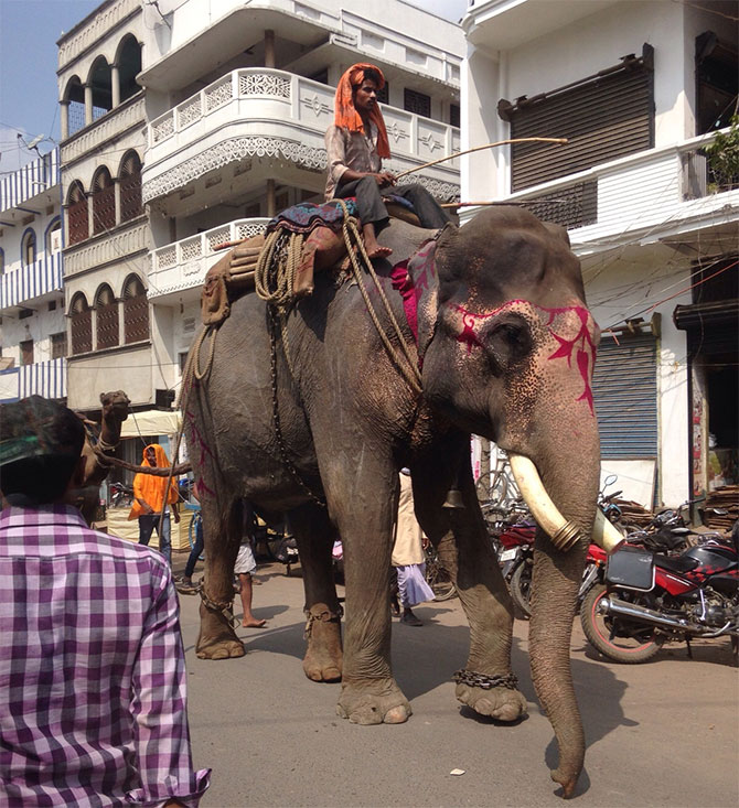 An elephant on Siwan's main road