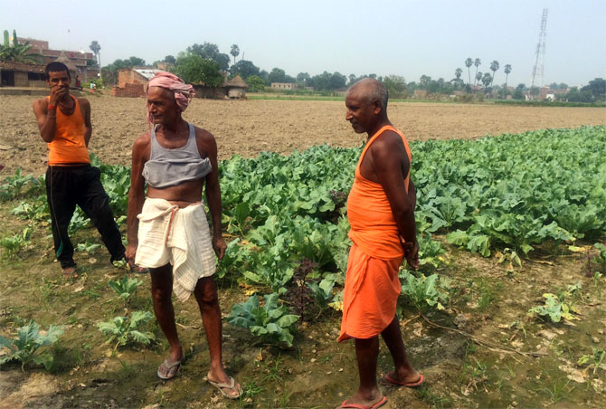 Farmers in their field in Bihar