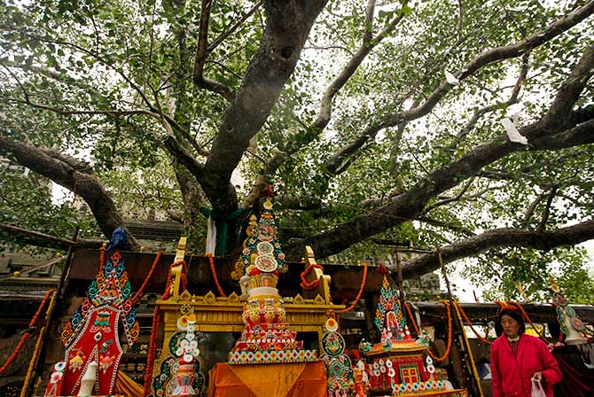 The Mahabodhi tree