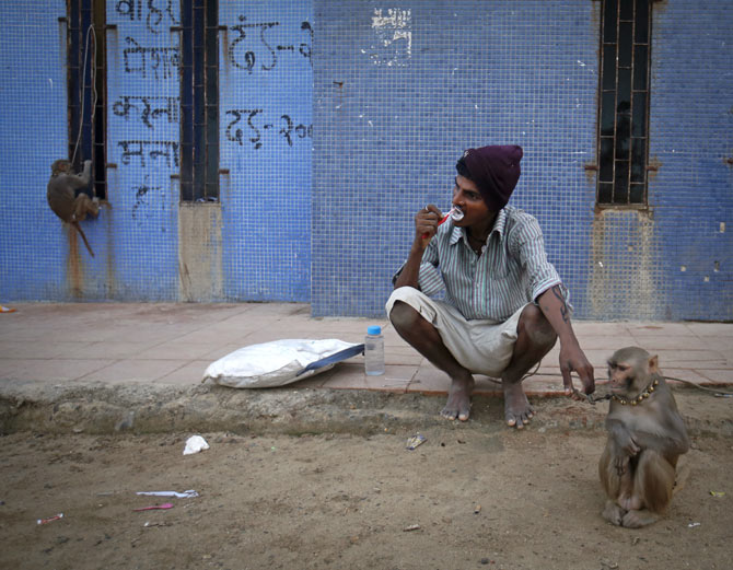 A man and his monkey go through morning ablutions near a beach in Mumbai, November 5, 2012. Photo: Danish Siddiqui/Reuter