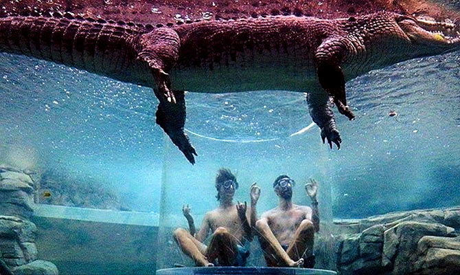 05eaae405a45 Swimming with the crocs - Rediff.com India News