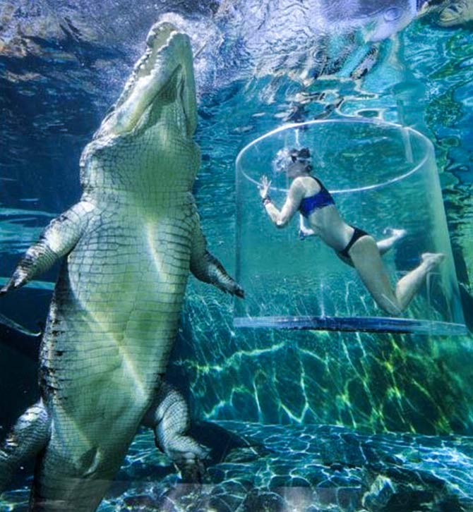 df880fafbb5f Crocosaurus Cove is renowned for its terrifying  Cave of Death  where  visitors can go diving with giant crocodiles. It s the only crocodile dive  in ...