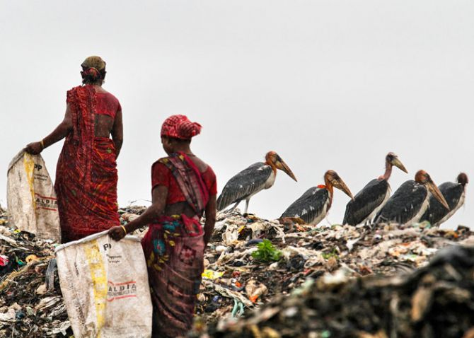 Scavengers, surrounded by a flock of Greater Adjutant birds, collect plastic for recycling at a dump site on World Environment Day in the northeastern Indian city of Guwahati June 5, 2013. Photo: Utpal Baruah/Reuters