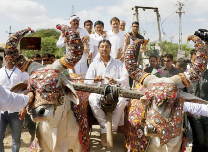 Rahul Gandhi on the campaign trail in Gujarat: Hanjadapar village, Dwarka district. Photograph: PTI Photo
