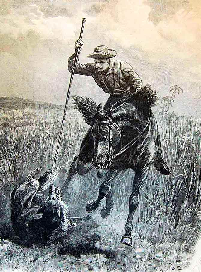 Wolf hunting in India back in 1895. Engraving of a hunter on horseback spearing a wolf in India. Sketch: courtesy The Graphic/Wikimedia Commons