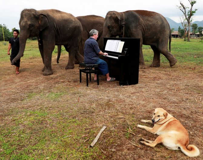India News - Latest World & Political News - Current News Headlines in India - Meet the pianist for elephants