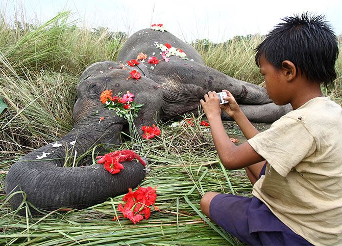 A female elephant dies in a train accident