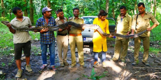 When a 14.4-ft-long python was rescued in Assam