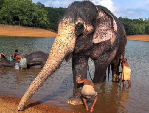 Inside India's first ever elephant rehab centre