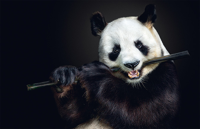 Intimate animal portraits that you must see!
