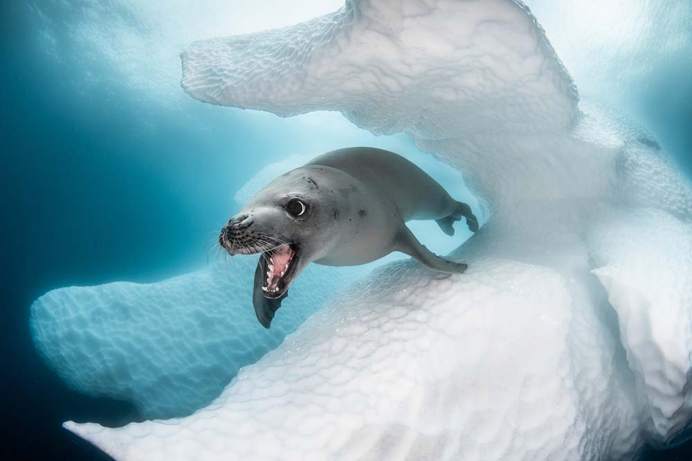 These are the best underwater photos of the year!