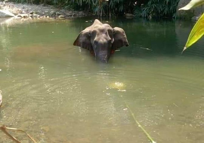 'Elephant didn't eat for 2 weeks before drowning'