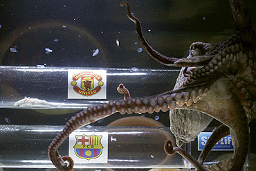 An octopus named Iker predicts Manchester United's victory against Barcelona in their Champions League final soccer match, to be played on May 28