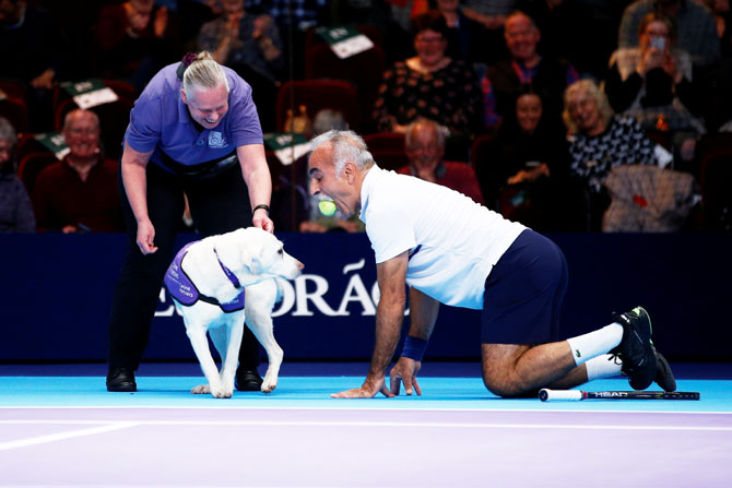 Mansour Bahrami kneels with a tennis ball in his mouth next to one of the dogs from the charity 'Canine Partners' during the Champions Tennis doubles match