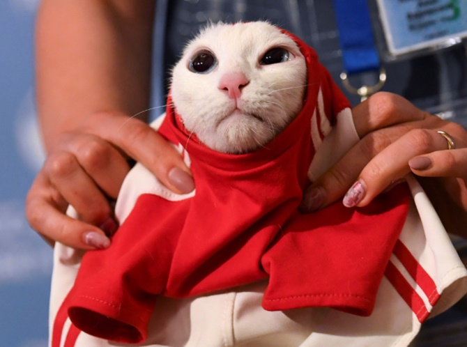 Russia's psychic cat picks home team for World Cup opener