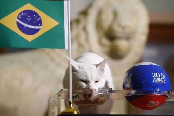 Feline fortune-teller backs Brazil to beat Costa Rica